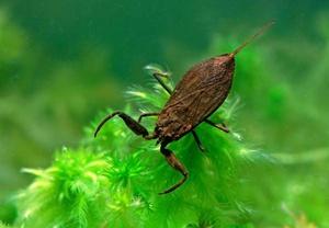 Скорпион и паук на природе нам не друг фото 2