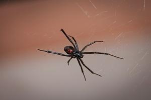 Скорпион и паук на природе нам не друг фото 1