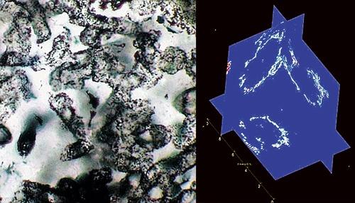 Отпечатки, которые оставили первые жители Земли (слева), и пространственная модель