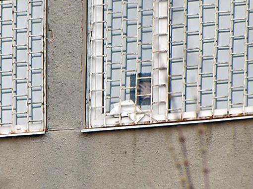 Чтобы увидеть своих соратников, Тимошенко разорвала пленку, которой заклеены ее окна.  Фото: Фейсбук Марины Сороки.