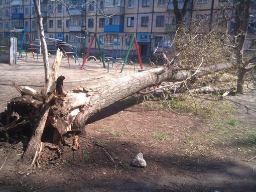 Упавшее дерево. Фото с сайта vk.com