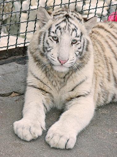 Фото: пресс-служба зоопарка