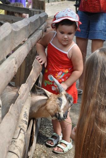 Камерунские козы дали потомство в марте.