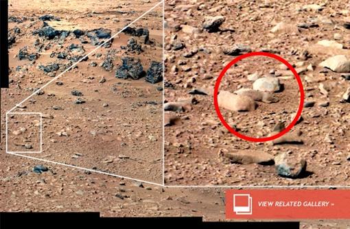 Найдите зверька! Фото NASA с сайта discovery.com.
