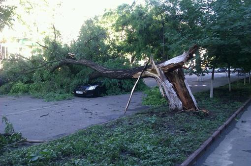 Упавшие деревья помяли с десяток автомобилей. Фото - паблик Одесса как она есть