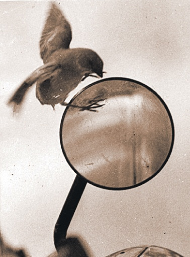 Птицы у зеркала.