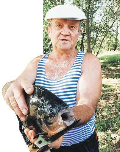 Всякую рыбу ловил Григорий Курилкин в Дону. Но такую - первый раз. Дай бог, последний! Фото: Наталья ВОЛОДЬКИНА.