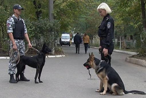 Искать бомбу помогали собаки. Фото: УГСЧС в Одесской области
