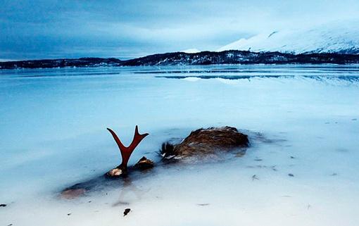 Рыба рыбой, но норвежцам встречаются и вот такие находки... Фото: СОЦСЕТИ