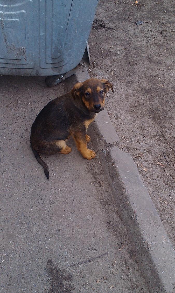 Сейчас пострадавший от человеческой жестокости щенок ищет хозяев. Фото: Татьяна Перевязко