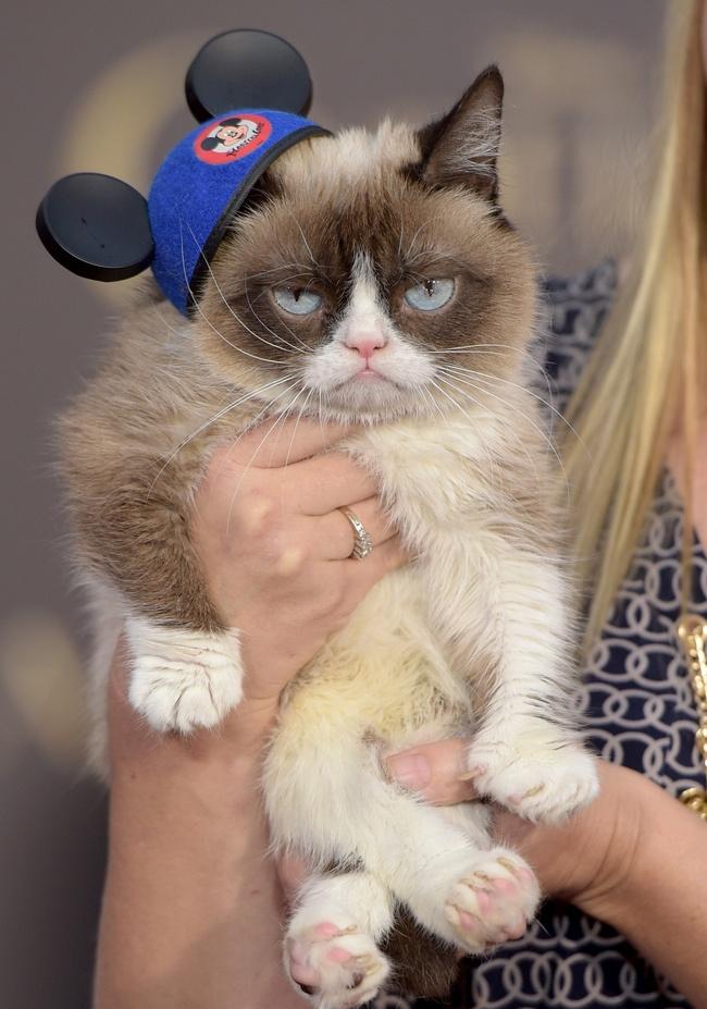 Grumpy Cat не пропускает модные тусовки.