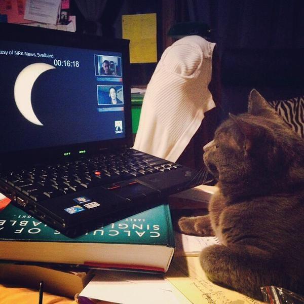 А кот Мартин из Англии смотрел на затмение Солнца с монитора ноутбука. Фото: соцсети