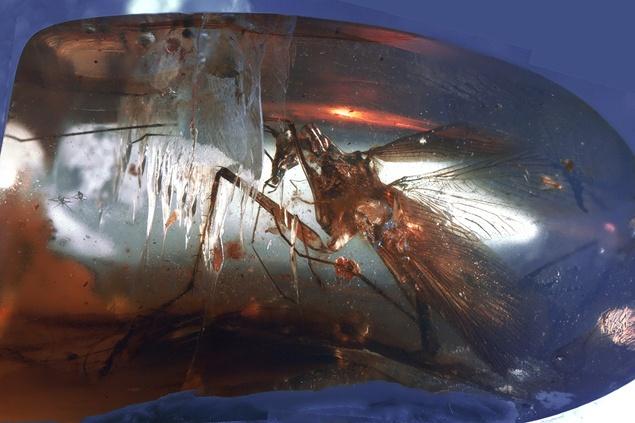 Кусок янтаря с тараканом внутри. Словно бы машина времени...100 миллионов лет...