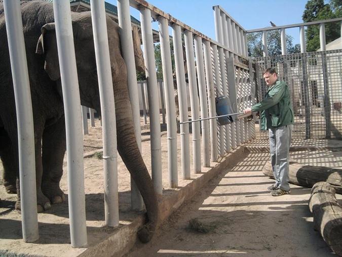 Хорас, Венди, Тенди - как живется слонам в Украине фото 2