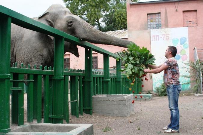 Хорас, Венди, Тенди - как живется слонам в Украине фото 3