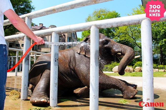Хорас, Венди, Тенди - как живется слонам в Украине фото 1
