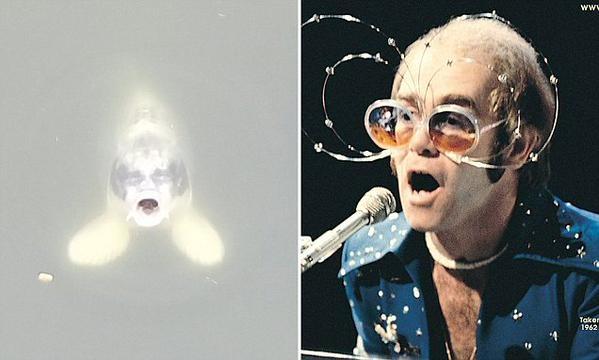В 70-е Элтон Джон носил бакенбарды и большие очки.