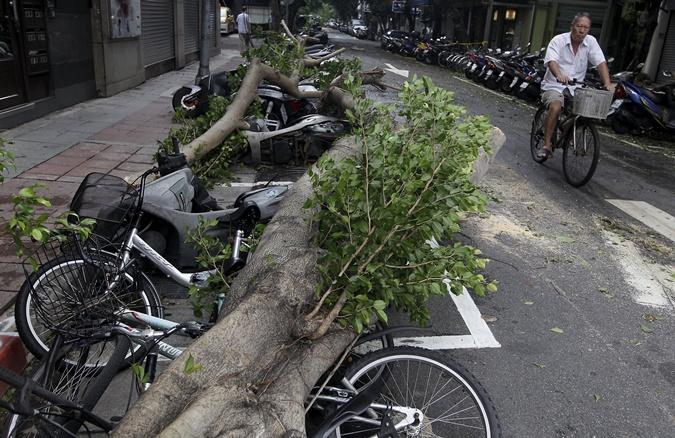Дерево упало на проезжую часть. Фото: REUTERS