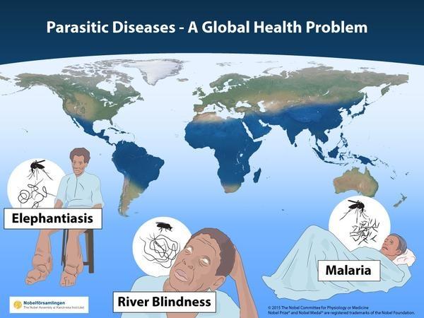 Три глобальных инфекции: малярия, речная слепота и слоновая болезнь.