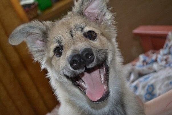 Обычный щенок с двойным носом. Фото: соцсети