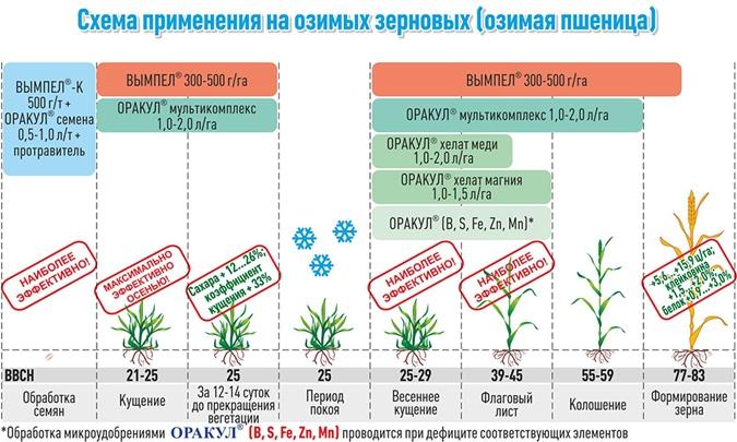Факт. Системный уход за посевами – гарантия высокого и качественного урожая фото 1