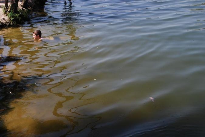 Отдыхающие продолжают купаться рядом с всплывшей вверх брюхом рыбой.  Фото: sobitie.com.ua