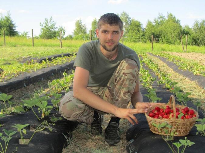 На 40 сотках земли боец АТО Николай Стецькив выращивает клубнику без
