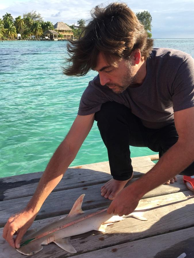Американские ученые обнаружили новый вид акулы-молота фото 1