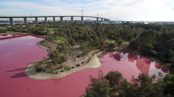 Соленое озеро вАвстралии стало розовым из-за погодных изменений