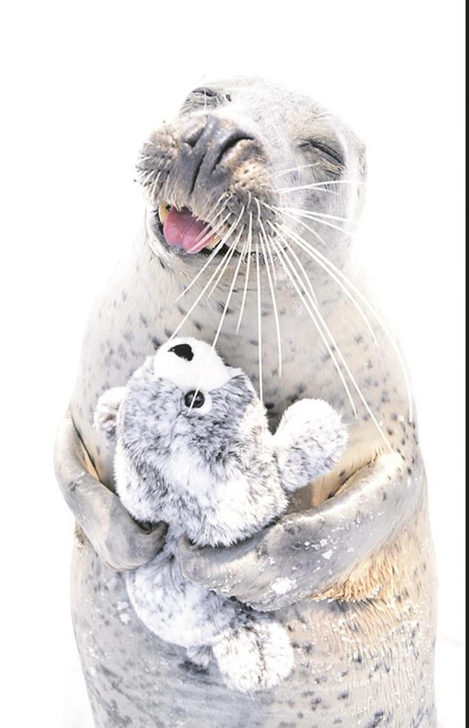 В Японии обнаружился самый милый тюлень в мире фото 1