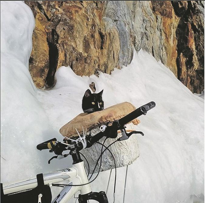Кот-путешественник проехал 200 км на велосипеде фото 1