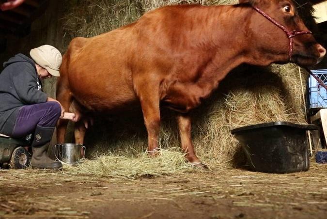 5 главных мифов о молоке фото 1