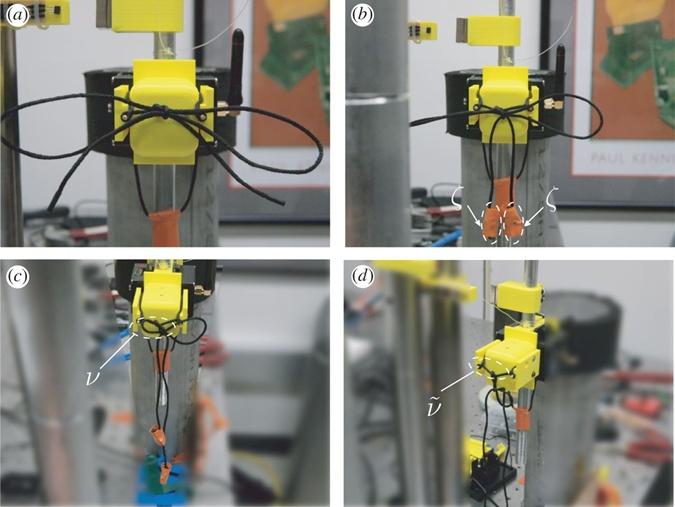 Ученые выяснили, почему развязываются шнурки фото 5