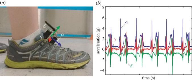 Ученые выяснили, почему развязываются шнурки фото 3