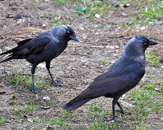 Секреты городских птиц: кто и как поет у нас под окнами фото 4