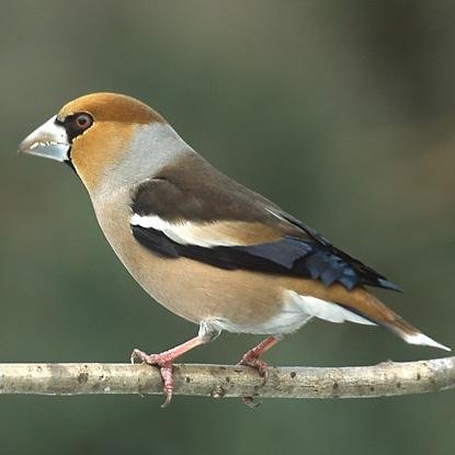 Секреты городских птиц: кто и как поет у нас под окнами фото 8