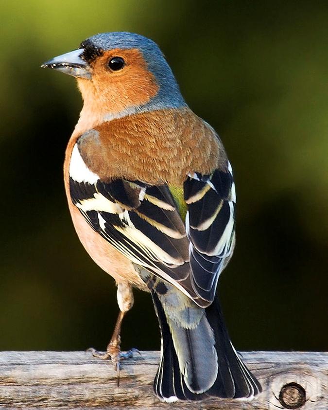 Секреты городских птиц: кто и как поет у нас под окнами фото 1