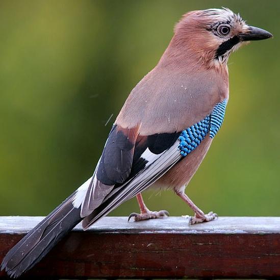 Секреты городских птиц: кто и как поет у нас под окнами фото 3