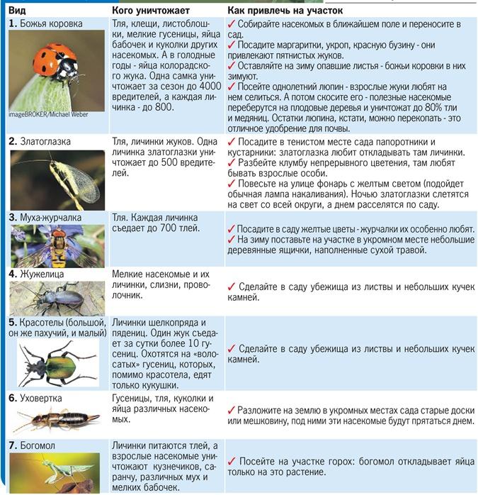 Защитить сады от вредителей можно при помощи насекомых фото 1