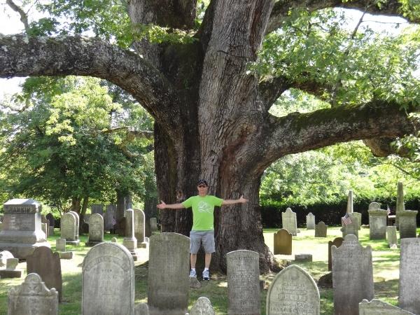 ВНью-Джерси спилили одно изсамых старых деревьев вСША