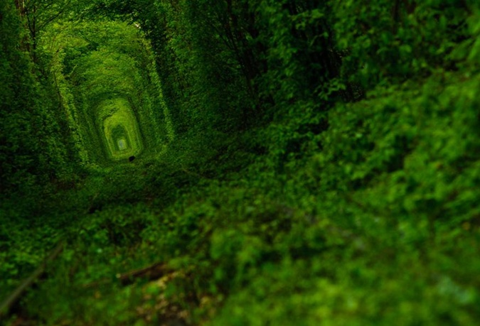 Туннель любви и замки Волыни. Фото: news.derevorod.com