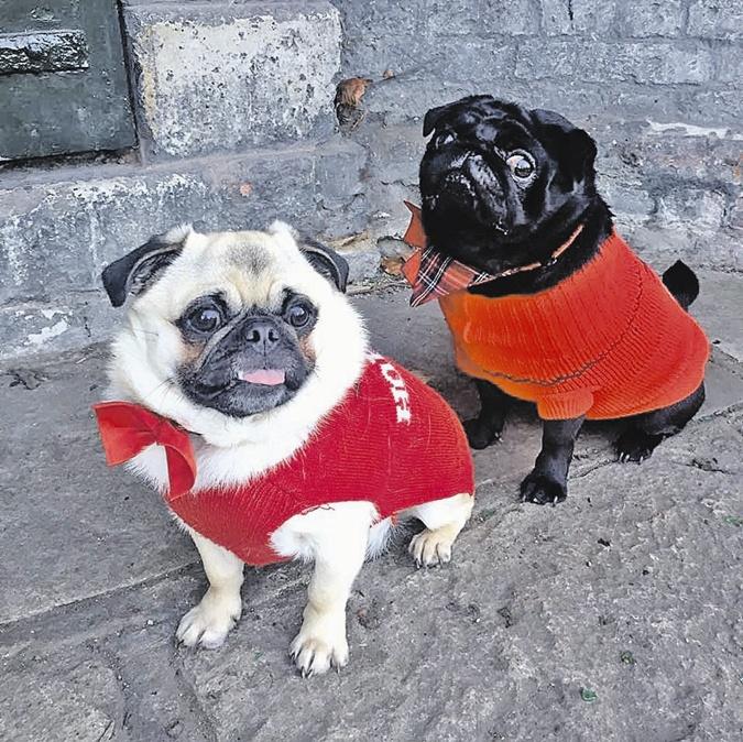 Сейчас Крейг все внимание уделяет дочери и мопсам - фотографиями собак забита вся его страничка в соцсетях. Фото: facebook.com