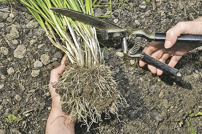 5 важных дел сентября: убираем листья, сажаем тюльпаны фото 1