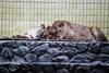Спят замерзшие зверюшки…