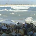 Бердянскую косу сковали льды
