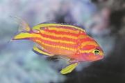 5 новых видов животных, которые были открыты учеными в 2016 году