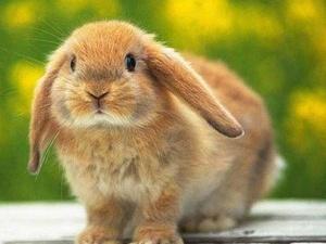 Прикольные картинки с кроликами 6