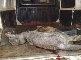 На спальные районы Запорожья нападают волки
