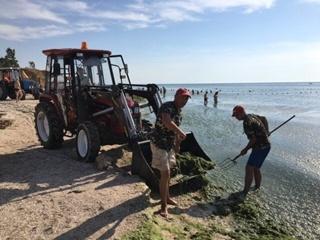Опасно ли купаться в позеленевшем Азовском море