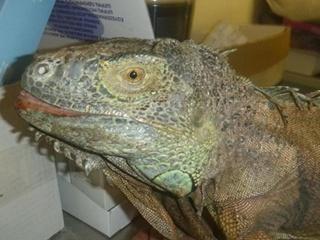 Нашлись хозяева  динозавра , поедавшего кабачки под Киевом